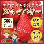 いちご スカイベリー 約300g×2パック  大門さんと菊地さんのスカイベリー 栃木県産 送料無料