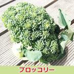 糸島ブロッコリー   佐賀七山・福岡糸島の新鮮野菜