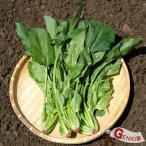 ほうれん草80g 佐賀七山・福岡糸島の新鮮野菜