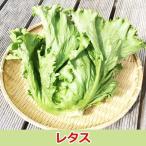 レタス1株 佐賀七山・福岡糸島の新鮮野菜