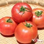雅虎商城 - トマト3〜4玉 佐賀七山・福岡糸島の新鮮野菜