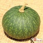 かぼちゃ1玉  佐賀七山・福岡糸島の新鮮野菜