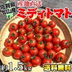 雅虎商城 - ミディトマト約1.5kg佐賀県七山産の新鮮野菜(送料無料)