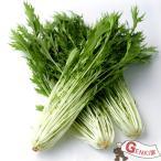 水菜1袋  佐賀七山・福岡糸島の新鮮野菜