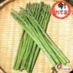 蘆筍 - アスパラガス 1束 佐賀七山・福岡糸島の新鮮野菜