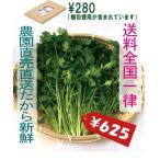 パクチー 200g 生野菜 税込 クリックポスト便 鮮度保持フィルム包装 トレファームの砂栽培育ちで元気な野菜です!