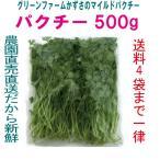 パクチー 業務用 500g 生野菜 税込  鮮度保持フィルム包装 トレファームの砂栽培育ちで元気な野菜です!