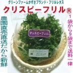 グリーンファームかずさオリジナルフリルレタス 常温便 鮮度保持フィルム包装 生野菜 税込 1袋〜9袋 トレファームの砂栽培育ちで元気な野菜です!