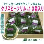 グリーンファームかずさオリジナルフリルレタス 10袋セット 常温便 鮮度保持フィルム包装 生野菜 税込 トレファームの砂栽培育ちで元気な野菜です!