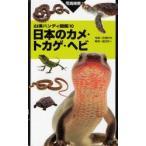 日本のカメ・トカゲ・ヘビ 写真検索