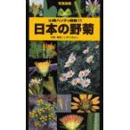 日本の野菊 写真検索