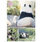 癒されパンダ リーリーとシンシン   DVD