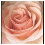サニーデイ・サービス/Best Flower −B side collection−