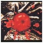 桑田佳祐/孤独の太陽(CD)