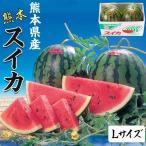 スイカ 熊本県産 1箱 Lサイズ・5kg(×2玉セット)  高級すいか/等級:秀(赤)|化粧箱入り 贈答用 ギフト・送料無料