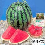 スイカ 熊本県産 1箱 Mサイズ・4kg(1玉)  高級すいか/等級:秀(赤)|化粧箱入り 贈答用 ギフト・送料無料