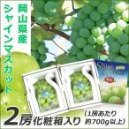 岡山県産シャインマスカット 2房 化粧箱入り 1房あたり700g以上 送料無料 誕生日 贈り物 果物 ギフト ぶどう ブドウ マスカット 葡萄 種なしぶどう