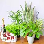 観葉植物5株セット 4号サイズ 鉢植え 送料無料