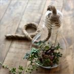 花瓶 花びん ガラス 吊るす 吊り下げ 電球型 デザイン ベース 花器 ガラスのハンギングベース ランプ