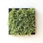 壁飾り 人工観葉植物 壁掛けインテリア ディスプレイ リビング 光触媒 壁面 オーナメント パネル ウォールデコレーショングリーン B