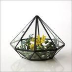 テラリウム ガラス 小物入れ アイアン 観葉植物 多肉植物 サボテン 観賞 ディスプレイ かわいい インテリア 小さなガラスのテラリウム
