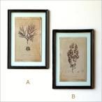 アートフレーム おしゃれ アンティーク 壁掛け インテリア 壁飾り 植物 額絵 クラシックアートフレーム グラス2タイプ