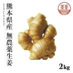 生姜 無農薬 2,000g 熊本県産 国産生姜 しょうが ショウガ 根生姜