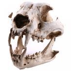 送料無料 インテリア 室内装飾ハロウィン ギフト犬樹脂頭蓋骨骨標本 正規輸入品
