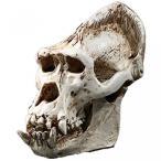 送料無料 インテリア 室内装飾ハロウィン ギフト ゴリラ樹脂頭蓋骨骨標本 正規輸入品
