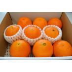 ネーブルオレンジ  9個又は12個入り