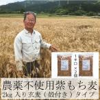 もち麦 お徳用パック 業務用 国産 無農薬 栄養価最高峰の殻付き紫もち麦品種 セール