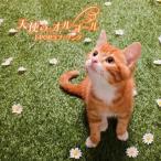 【メール便送料無料】決定盤!! 天使のオルゴール J-POPラブ・ソング ベスト[CD]