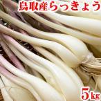 鳥取県産 砂丘らっきょう 5kg 生らっきょう 土 根 茎 付き 大きさ不揃い らくだ アチーブエモーション 産地直送 他のメーカー商品との同梱代引日付指定不可