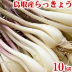 予約受付中 鳥取県産 砂丘らっきょう 10kg 生らっきょう 土 根 茎 付き 大きさ不揃い らくだ 井上農園 産地直送 他のメーカー商品との同梱代引日付指定不可