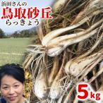 鳥取県産 砂丘らっきょう 5kg 生らっきょう 砂付き 根付き 茎付き 不揃い 福部産 浜田園 種 苗 土 産地直送 他のメーカー商品との同梱不可 代引不可