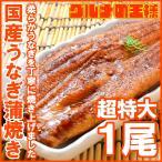 超特大 国産うなぎ蒲焼き 平均250g前後×1尾 タレ付き (国産 うなぎ ウナギ 鰻)