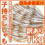 柳葉魚 - 訳ありししゃも(子持ちシシャモ・業務用1kg)