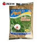 TTSノシバ 1kg 芝の種 (のしば) 多年生 タキイ種苗 【取寄商品】