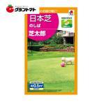 日本芝タキイノシバ 芝太郎の種