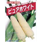 トウモロコシ 雪印交配・・・ピュアホワイト・・・<雪印のトウモロコシです。 種のことならお任せグリーンデポ>