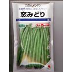 恋みどり タキイのつるなしインゲン品種です。種の通販ならグリーンデポ