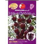 ミニトマト種子 トスカーナバイオレット   パイオニアエコサイエンスの紫ミニトマト品種です。