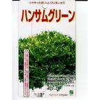 フリルレタスの種 ハンサムグリーン  横浜植木のレタス種子です。
