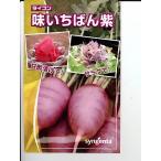 味いちばん紫ダイコン種  シンジェンタシードのダイコン種子です。