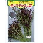 赤サラダからし菜  トキタ種苗の種です。