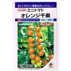 トマト タキイ交配 オレンジ千果  タキイ種苗のミニトマト品種です