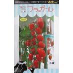 ダイヤ交配 フラガール   トキタ種苗のミニトマト品種です。