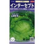 野菜種 レタス インターセプト 小袋  サカタのタネ食彩