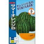 スイカ サマーオレンジB   8粒 ナント交配