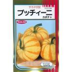 野菜種 かぼちゃ プッチーニ 100粒 サカタ交配